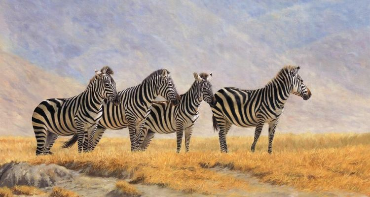 zebras-ngorongoro-crater-david-stribbling